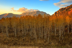 Wasatch fall sunset from Squaw Peak. Timpanogos with golden aspens in the Wasatch Mountains, Utah, USA Royalty Free Stock Photos