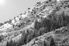 Wasatch Mountain peaks in northern utah in the wintertime stock photography