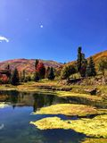 Wasatch Rocky Mountains on a bright fall day with pond and algae in the foreground and trees turning autumn colors in the backgrou. View of the Wasatch Rocky Stock Images