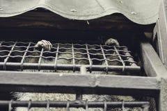 Wasbeer Stock Fotografie