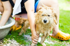 Waschen des Hundes Stockfotografie