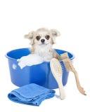 Waschen Sie den Hund Lizenzfreies Stockfoto
