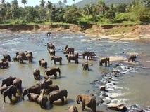 Waschende Elefanten Lizenzfreie Stockfotos