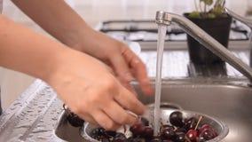 Waschende Kirsche und Kochen des Käsekuchens stock footage