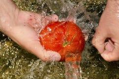 Waschende Tomate des jungen Mannes mit Quellwasser Lizenzfreies Stockbild