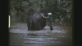 Waschender Elefant stock video footage