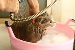 Wash cat Royalty Free Stock Photography