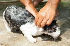 Wash cat Stock Photos