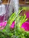 Wash the parsley, dill shower, kitchen, dishes, wash the greens Royalty Free Stock Photos