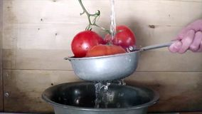Wash tomatoes in colander stock video