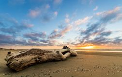 Beach Log Sunset. Wash up log on a flat sandy Beach at sunset Stock Images