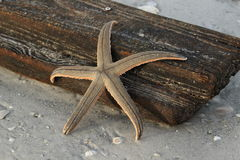 Washed ashore starfish and wooden board Stock Photos