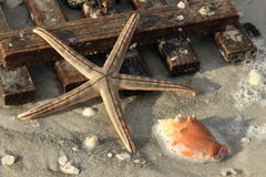 Washed ashore starfish and wooden board Stock Image