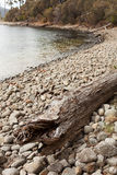 Washed ashore tree trunk Stock Photo