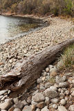 Washed ashore tree trunk Stock Photos