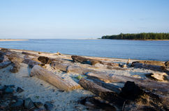 Washed away logs by the beach stock photography
