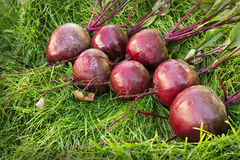 Washed beet lies on the green grass Royalty Free Stock Photos