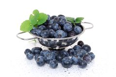 Washed Blueberries Royalty Free Stock Photography