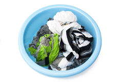 Washed clothes. In the blue bowl Royalty Free Stock Images