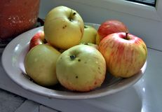 Washed colorful apples on the plate Royalty Free Stock Image