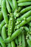 Washed green peas. Top view of fresh washed green peas [pisum sativum Royalty Free Stock Images