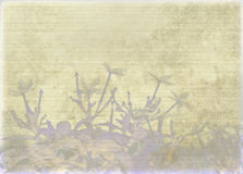 Washed jasmine print on ribbed parchment Royalty Free Stock Image