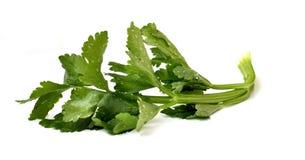 Washed leek leaf Royalty Free Stock Images