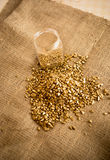 Washed out gold nuggets and glass jar on burlap Stock Images