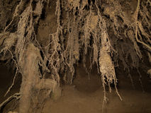 Washed out hanging roots moss. The roots of a tree washed out by the rain Royalty Free Stock Photography