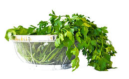 Washed parsley. Dried fresh parsley as a salad ingredient Royalty Free Stock Photos