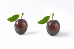 Washed plums Royalty Free Stock Images