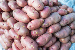 Washed Potato Royalty Free Stock Images