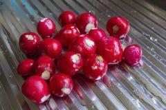 Washed radish on kitchen counter Stock Photos