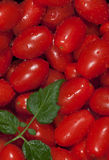 Washed Red Grape Tomatoes. Freshly washed grape tomatoes with green leaf sprig from tomato plant Stock Images