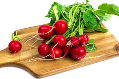Washed red young radish on wooden board. Studio Photo Stock Photos