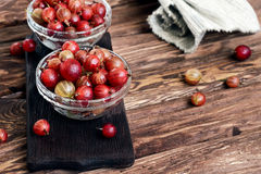 Washed ripe gooseberry Royalty Free Stock Images