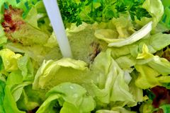 Drops of water and pieces of lettuce in motion into a green pot. closeup view of Fresh mixed salad field. royalty free stock photo