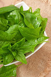 Washed spinach leaves in a bowl Stock Photography
