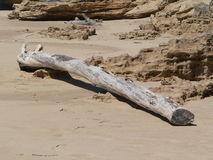 Washed Up Tree. Stray section of a tree washed up onto a sandy beach Stock Photos