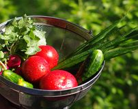 Washed vegetables in sieve. On green leaves background Royalty Free Stock Photos
