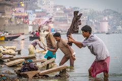A washer is working in the holy water of the river Ganges Stock Images