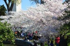 Washignton DC, Columbia, USA - April 11, 2015: Cherry Blossom Spectacular av Washington D C royaltyfria foton