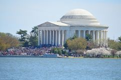 Washignton DC, Kolumbien, USA - 11. April 2015: Jefferson Memorial-Kirschblüten Lizenzfreie Stockfotografie