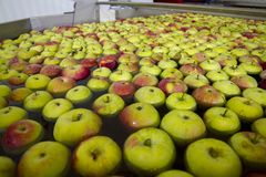 Washing apples in the fruit processing plant, close. Fruit processing plant, a modern fruit processing plant, apples in the foreground, apples in the package stock photos