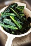 Washing black tuscan kale leaves Stock Images