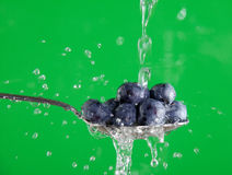 Washing Blueberries Royalty Free Stock Image