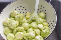Washing Brussels sprouts Royalty Free Stock Photos