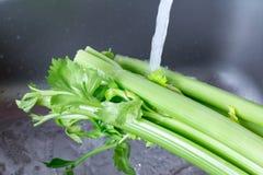 Washing Celery in the Kitchen Sink under running water. Washing Celery in the Kitchen Sink stock photo
