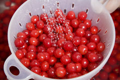 Washing cherries Royalty Free Stock Photo