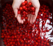 Washing cherries Stock Photo